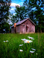 Cabin and Daisy-